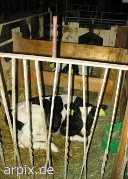 Landwirtschaft News & Agrarwirtschaft News @ Agrar-Center.de | Foto: Opfer der Milchproduktion.