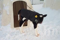 Landwirtschaft News & Agrarwirtschaft News @ Agrar-Center.de | Agrar-Center.de - Agrarwirtschaft & Landwirtschaft. Foto: Frische Luft und mit Decke: Das beste für Kälber auch im Winter.