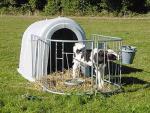 Landwirtschaft News & Agrarwirtschaft News @ Agrar-Center.de | Foto: Die Kälbernische eignet sich aufgrund ihrer Maße (1930x1375x1340mm / LxBxH), über die ersten zwei Wochen hinaus, bis zu ca. acht Wochen alten Zuchtkalb zu beherbergen.