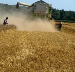 Landwirtschaft News & Agrarwirtschaft News @ Agrar-Center.de | Foto: Weizenernte (Foto: Proplanta).