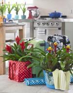 Orchideen-Seite.de - rund um die Orchidee !   Foto: Bromelien bringen den Urlaub zurück.