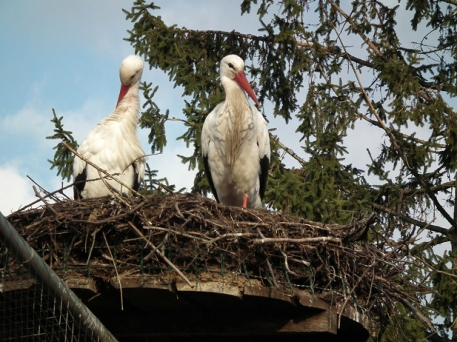 Ostern-247.de - Infos & Tipps rund um Geschenke | Die ersten Störche sind zurück - Storchenentdeckungstouren in der Südpfalz mit genussradeln-pfalz