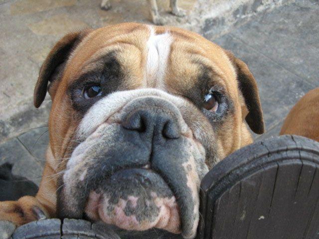 Oesterreicht-News-247.de - Österreich Infos & Österreich Tipps | Tiere in den Tierheimen lieben ihre Tierpfleger