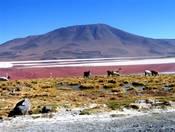 Pflanzen Tipps & Pflanzen Infos @ Pflanzen-Info-Portal.de | Rundreisen durch Bolivien