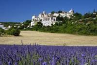 Frankreich-News.Net - Frankreich Infos & Frankreich Tipps | Fahrrad Frankreich: Wenn die violetten Blüten des Lavendelstrauchs ihre volle Pracht entfalten, wird die Fahrt durch die Provence zu einem unvergesslichen Erlebnis.