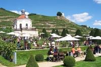 Sachsen-News-24/7.de - Sachsen Infos & Sachsen Tipps | Kulinarische Weinwanderung: Weingenuss und Wandern gehören in Radebeul zusammen. Der Weinwanderweg