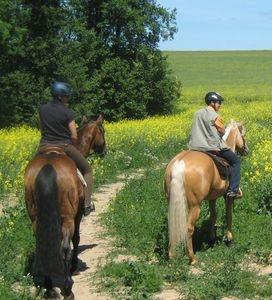 Ost Nachrichten & Osten News | Reiterreise-Tipp auf Mit-Pferden-reisen.de: Dalwitz in Mecklenburg-Vorpommern