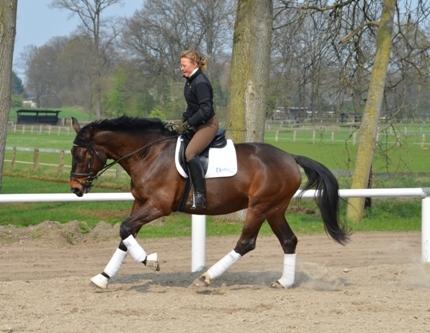 Landwirtschaft News & Agrarwirtschaft News @ Agrar-Center.de | So geht es richtig. Das Pferd dehnt sich an die Hand.