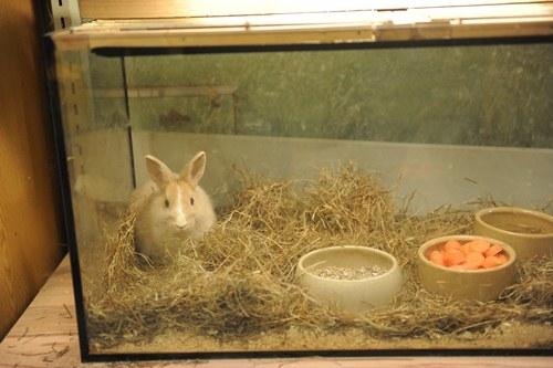 Sport-News-123.de | Deutscher Tierhilfe Verband e.V. überzeugt Eigentümer von Berlins traurigster Zoohandlung, den Tierhandel aufzugeben