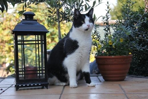 Rheinland-Pfalz-Info.Net - Rheinland-Pfalz Infos & Rheinland-Pfalz Tipps | Viele Gartenpflanzen können für Haustiere gefährlich sein