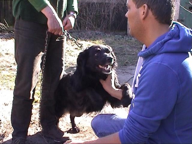 "Sport-News-123.de | Geretteter Kettenhund ""Bully"" sucht neues Zuhause in Berlin"
