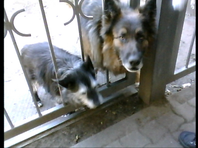 Sport-News-123.de | Tierschützer decken auf: Hundeleid im Spreewald