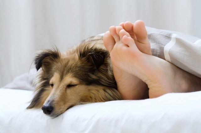 Shopping -News.de - Shopping Infos & Shopping Tipps | Orthopädische Hundebetten von DoggyBed