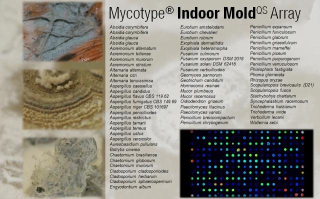 Testberichte News & Testberichte Infos & Testberichte Tipps | Der Mycotype® Indoor MoldQS Array identifiziert und differenziert 42 Schimmelpilzarten, 8 Gattungen und 11 Cluster für eine effizientere Untersuchung verschiedenster Materialproben.