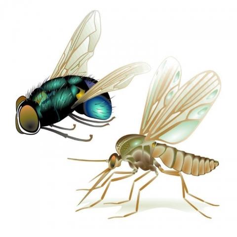 Bayern-24/7.de - Bayern Infos & Bayern Tipps | Fliege, Mücke, Wespe & Co. sind nicht nur lästig, sie können auch Bakterien und Krankheitserreger übertragen.