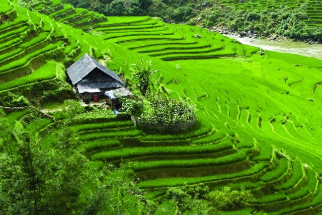 Ost Nachrichten & Osten News | Harmonie in Grün: Die Reisterrassen Nordvietnams