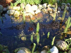 Pflanzen Tipps & Pflanzen Infos @ Pflanzen-Info-Portal.de | Xylit-Walze zur Wasserreinigung im Gartenteich