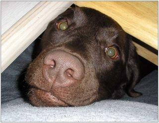 Tier Infos & Tier News @ Tier-News-247.de | Hunde wollen lieber die EM 2012 Zuhause genießen