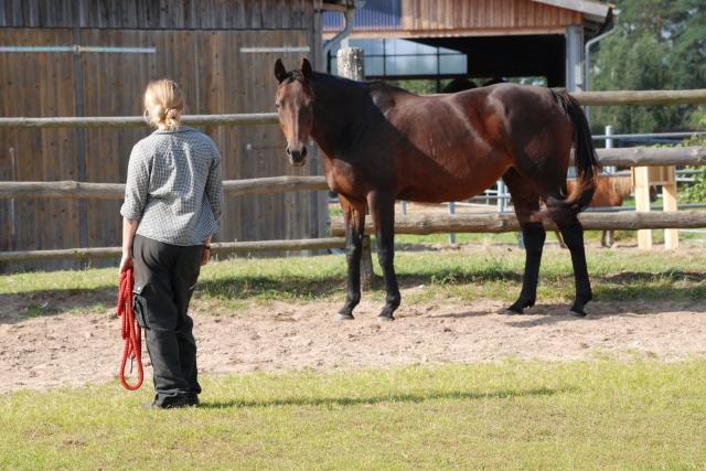 BIO @ Bio-News-Net | Pferde sind feinfühlige Kommunikationspartner