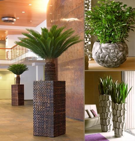 Pflanzen Tipps & Pflanzen Infos @ Pflanzen-Info-Portal.de | Hydrokultur