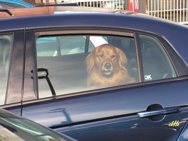 Auto News | Bund Deutscher Tierfreunde warnt vor Hitzschlaggefahr für Hunde