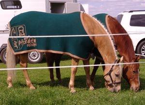 Tier Infos & Tier News @ Tier-News-247.de | Produkttest und Tipp auf Mit-Pferden-reisen.de: Buckenthal's Horseblankets