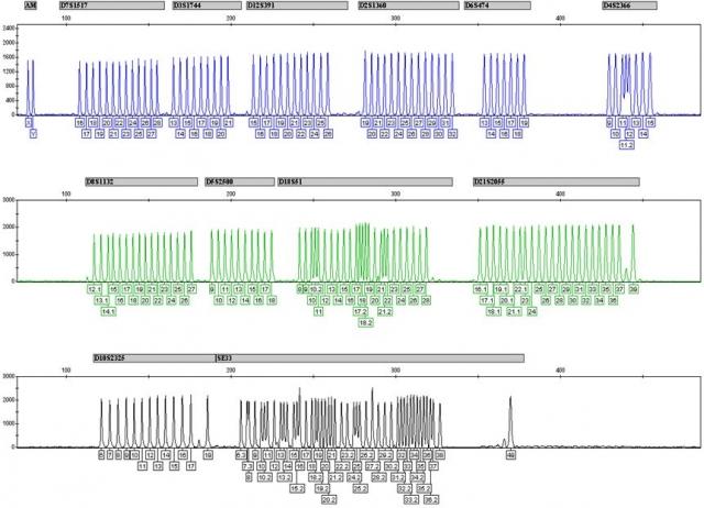 Testberichte News & Testberichte Infos & Testberichte Tipps | Der Mentype® Chimera® identifiziert 12 hoch polymorphe genetische Sequenzen, die ein ausgewogenes Vorkommen in der Bevölkerung aufweisen und dabei äußerst geringen Background generieren.