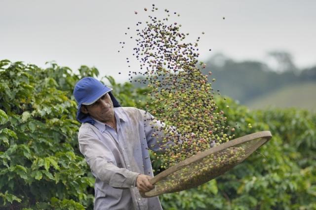News - Central: Kaffeefarmer in der Cooxupé Kooperative in Brasilien