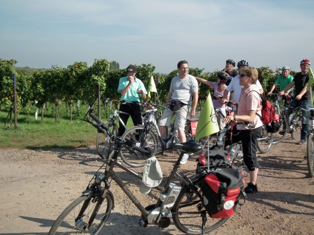 Hotel Infos & Hotel News @ Hotel-Info-24/7.de | Der Spätsommer  mit der Weinlese ist eine ideale Zeit, die Deutsche Weinstraße genussvoll beim Radeln und Wandern zu entdecken. Gruppen  wollen die Pfalz zunehmend  mit  Pedelecs erkunden und genießen.