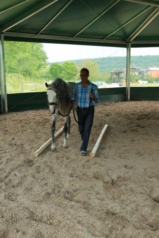 Tier Infos & Tier News @ Tier-News-247.de | Pferde sind hervorragende Führungskräftetrainer