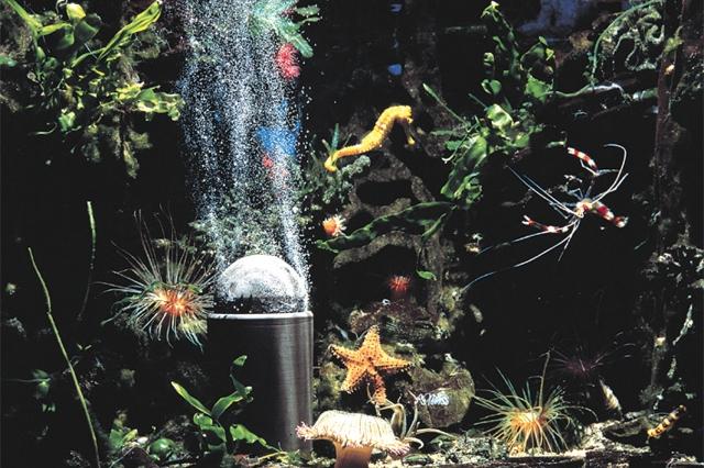 Technik-247.de - Technik Infos & Technik Tipps | Zierfische im Aquarium: Wird das Wasser in Gartenteichen oder Aquarien mit reinem Sauerstoff angereichert, fühlen sich die Zierfische wohl.