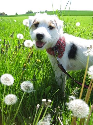 Shopping -News.de - Shopping Infos & Shopping Tipps | Auch Hunde können über die Tieranzeigen von markt.de vermittelt werden