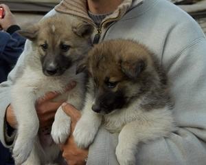 Sport-News-123.de | Tierhilfe e.V. Strasburg warnt vor skrupellosen Welpenhändlern