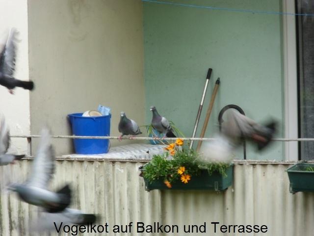Duesseldorf-Info.de - Düsseldorf Infos & Düsseldorf Tipps | Vogelkot auf Balkon und Terrasse