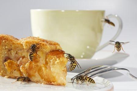 Technik-247.de - Technik Infos & Technik Tipps | Wenn Wespen die gedeckte Kaffeetafel umschwirren, kann das  Menschen mit Wespenphobie oder  Wespenallergie in arge Bedrängnis bringen.