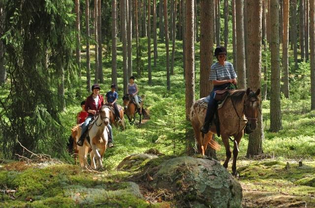 Baden-Württemberg-Infos.de - Baden-Württemberg Infos & Baden-Württemberg Tipps | Wanderreiten in den Wälder Värmland / Schweden