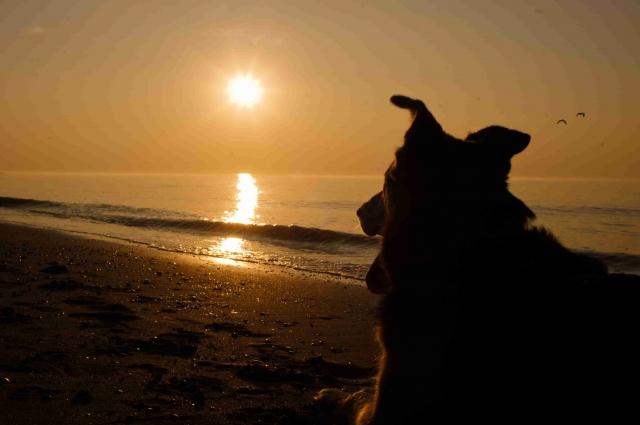 Tier Infos & Tier News @ Tier-News-247.de | Im Urlaub Haustiere vor Parasiten schützen
