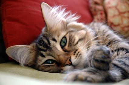 Tier Infos & Tier News @ Tier-News-247.de | markt.de lässt die Katze hoch leben