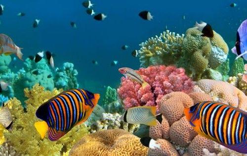 Pflanzen Tipps & Pflanzen Infos @ Pflanzen-Info-Portal.de | Ob exotische Zierfische, Aquarium Pflanzen oder Aquaristik Zubehör, Fans der Aquaristik kommen bei markt.de voll und ganz auf ihre Kosten.
