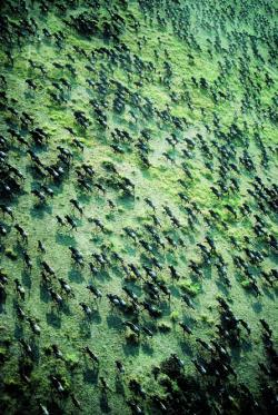 Ost Nachrichten & Osten News | Foto: Millionen von Gnus und Zebras ziehen zur Zeit der Tierwanderung in die Masai Mara im Süden Kenias.