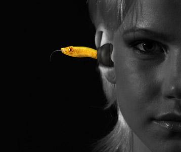 Handy News @ Handy-Info-123.de | Viper Head yellow