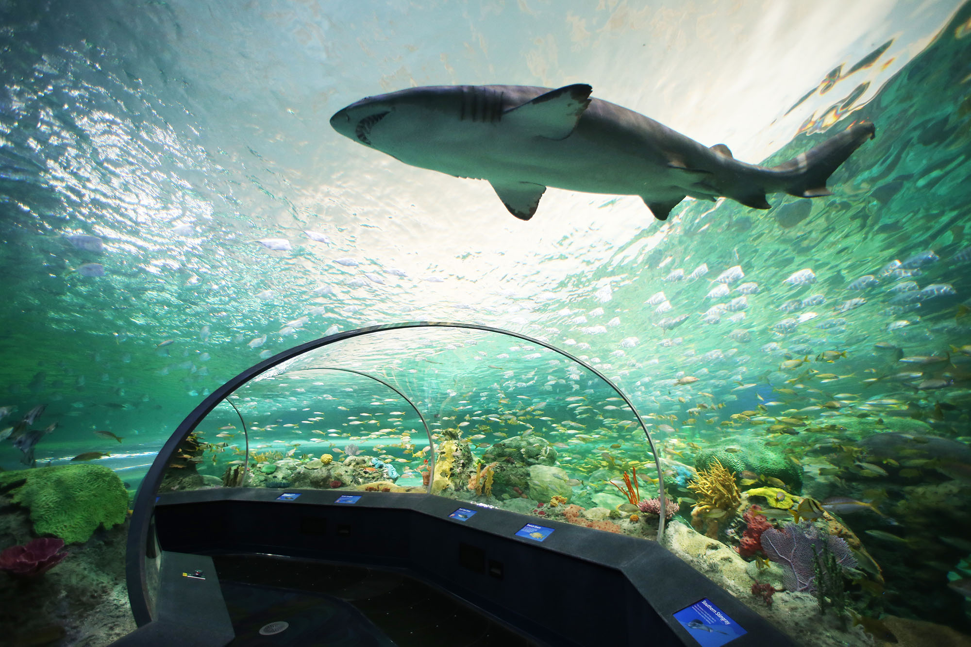 Aquaristik-Infos-247.de - Aquaristik Infos & Aquaristik Tipps | Foto: Foto: Das Ripleys Aquarium of Canada, Dangerous Lagoon