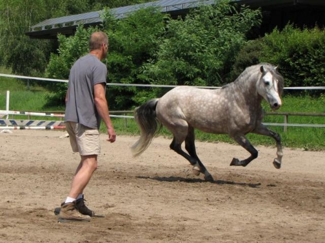 Frankfurt-News.Net - Frankfurt Infos & Frankfurt Tipps | Equi-Com®  Was Manager von Pferden lernen können