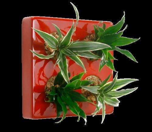 Pflanzen Tipps & Pflanzen Infos @ Pflanzen-Info-Portal.de | FlowerArt GmbH