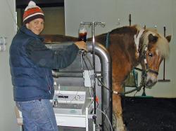 Landwirtschaft News & Agrarwirtschaft News @ Agrar-Center.de | Foto: Tierärztin Stephanie Kempchen im Einsatz: Hyperbare Ozontherapie bei der Stute Funny.