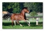 Versicherungen News & Infos | HORSE-LIFE Versicherungs-Service