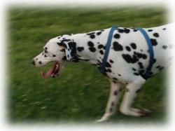 Landwirtschaft News & Agrarwirtschaft News @ Agrar-Center.de | Foto: Schnell unterwegs mit der Krankenversicherung für Hunde kein Problem.