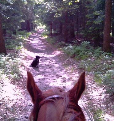 Landwirtschaft News & Agrarwirtschaft News @ Agrar-Center.de | www.mit-pferden-reisen.de