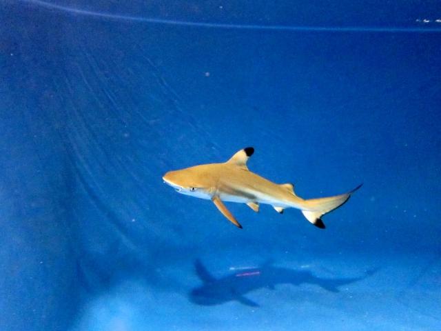 Aquaristik-Infos-247.de - Aquaristik Infos & Aquaristik Tipps | Hasselkus WeberBenAmmar PR