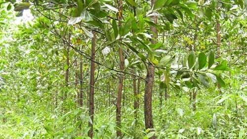 Vietnam-News.de - Vietnam Infos & Vietnam Tipps | Forest Finance Service GmbH